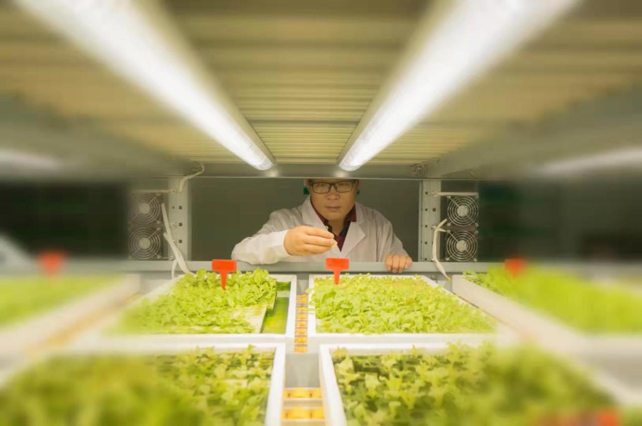 独家分享 中环易达植物工厂魏华农:植物工厂的未来3大方向