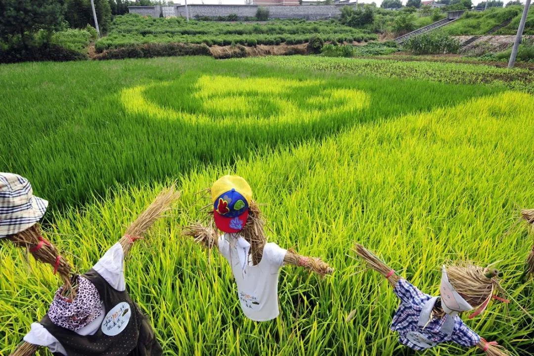 三农日报 未来采摘机器人发展的趋势;我国农业应进行有效循环农业利用