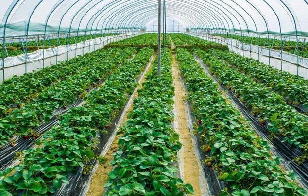 农业大棚智能化控制系统方案解析(专业资料)