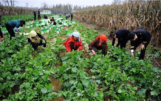 """未来中国农业""""6大难"""":你知道几个呢?"""