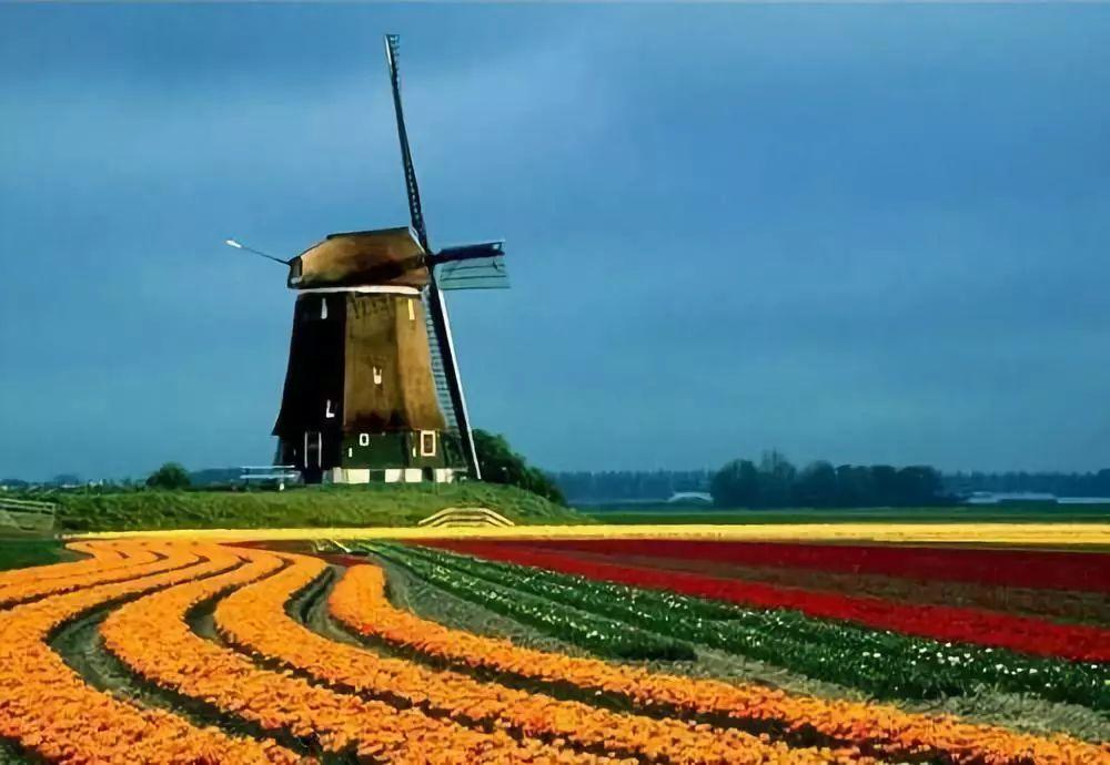 简析!荷兰农业的独门秘籍:三螺旋模式