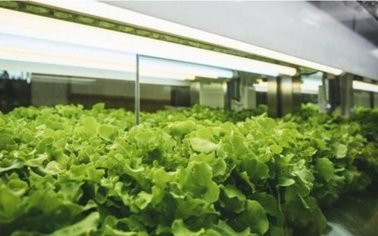 我国农业现代化快速发展 LED植物照明灯具需求持续增长