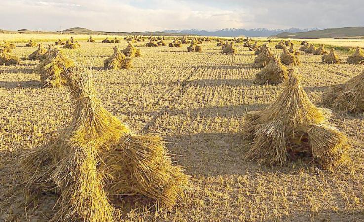 农业废弃物在非耕地设施中的利用现状及应用前景