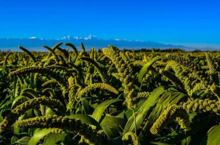 农业规模化经营:现状、问题和政策选择