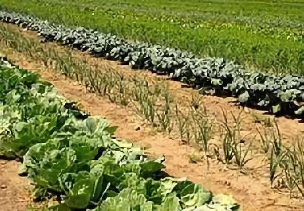 大佬|农业生态学教父:绿色革命是彻底的失败