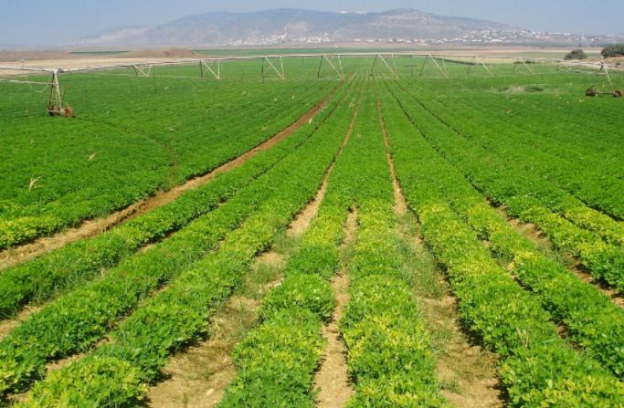 多元化农业发展道路