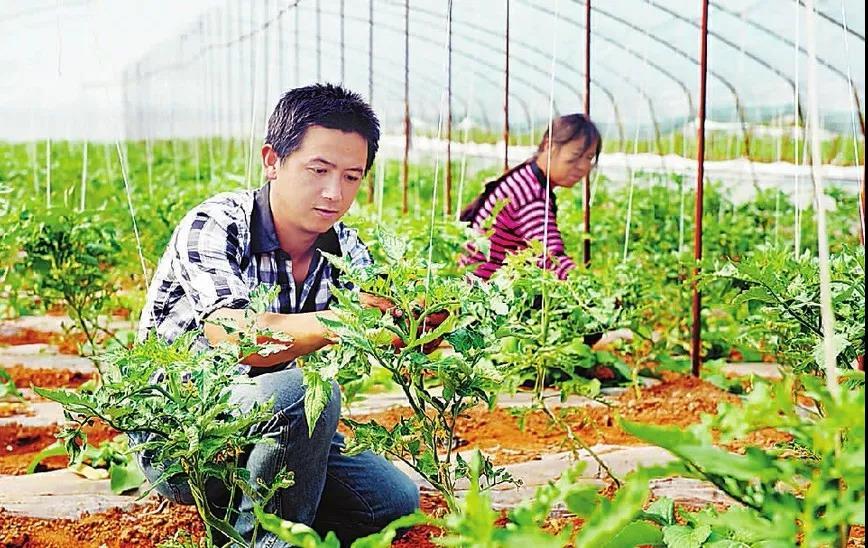 三农日报|我国缺乏世界级影响力的农产品品牌;蚯蚓粪有机肥种植效益最优