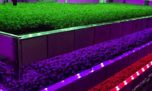 Agtech解决方案允许农业在室内移动