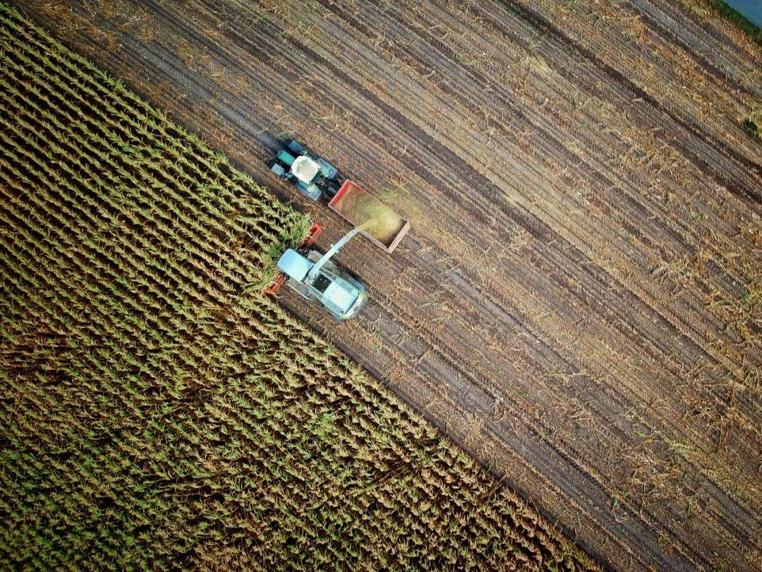 中外农业的最大差距,80%农业人都不知道!