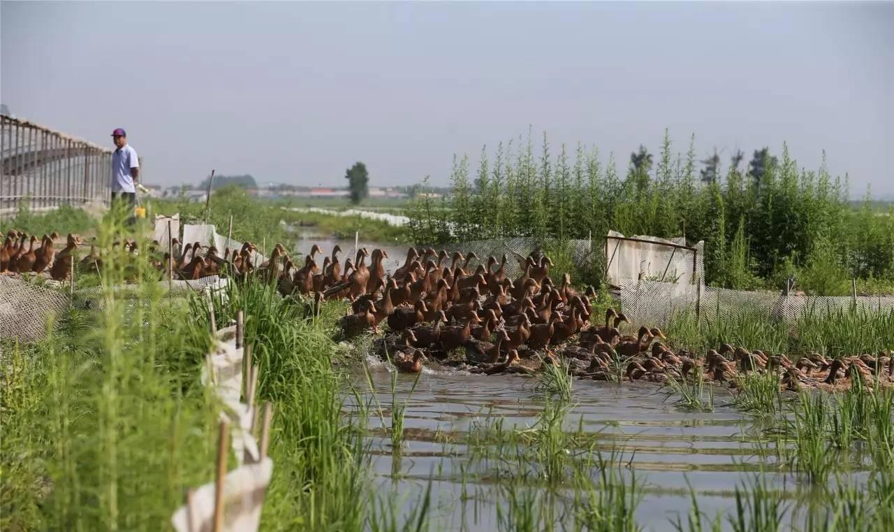 政策解读|农业农村部:大力发展种养结合、生态循环农业