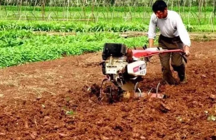 """""""定制农业""""兴起,是否是小农户的发展机遇"""