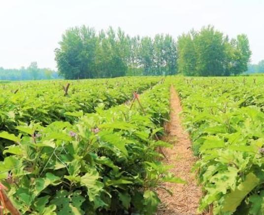 农业种植的10个大坑,钱再多也得掉进去