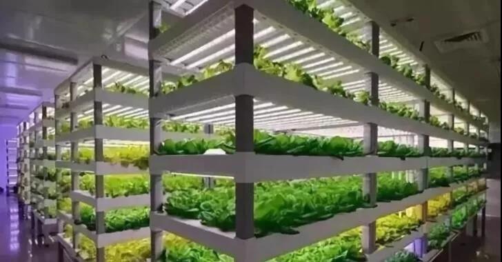 植物工厂:90%不盈利,但产品符合消费趋势,未来价值可期!