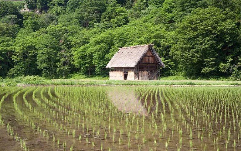 【海外模式】黄延廷等:日本农地规模化的制度、效果与启示