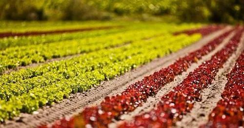 刚刚!国家下放农用地审批权,隐藏4大产业趋势,暴富的机会来了