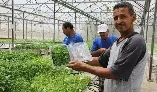 【海外模式】以色列的水肥一体化技术,让每个农民养活113个人,成为世界农业强国