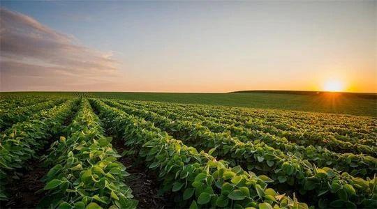 【政策】2020年农业重点扶持项目汇总