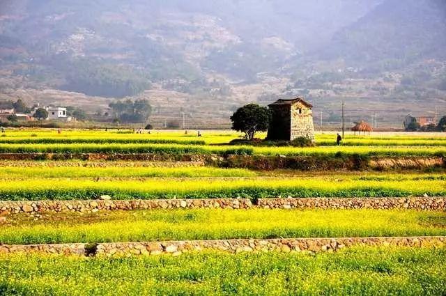 未来20年中国农业大势,早发现早挣钱 !
