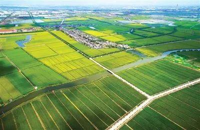 【深度分析】什么是生态农业?如何发展生态农业?一篇文章讲明白