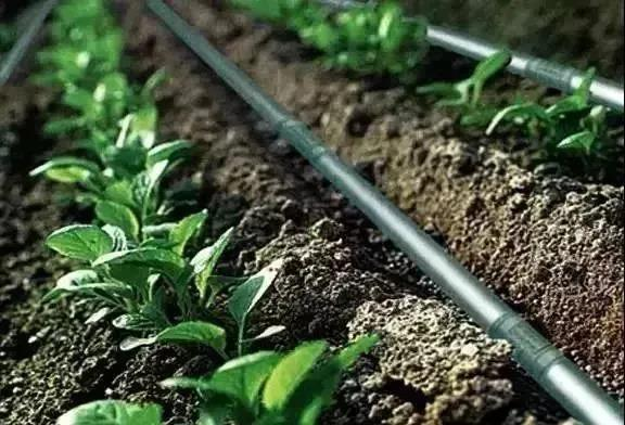 【新模式】水肥一体化是未来农业的发展方向?