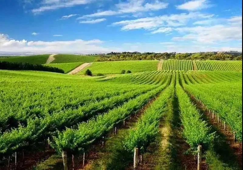 弹丸之国!靠什么做到全球领先,以色列农业震撼世界