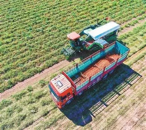 三农日报  政策:种植设施市场或引爆;报告:农村产业核心竞争力不强