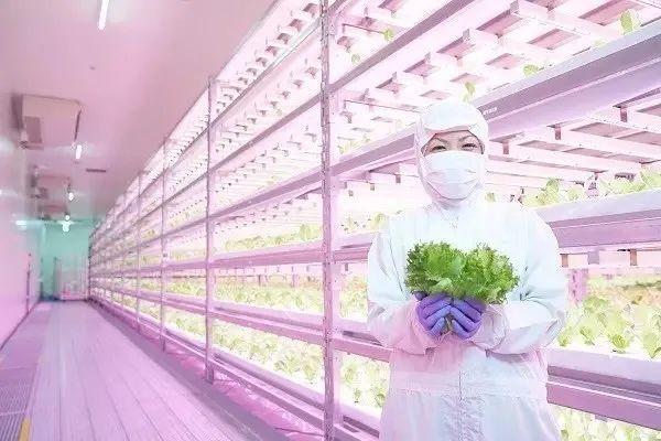 【行业趋势】垂直农业——未来养活人类的技术