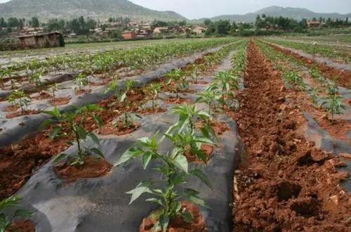 【行业观察】农业产业发展面临五大突出问题