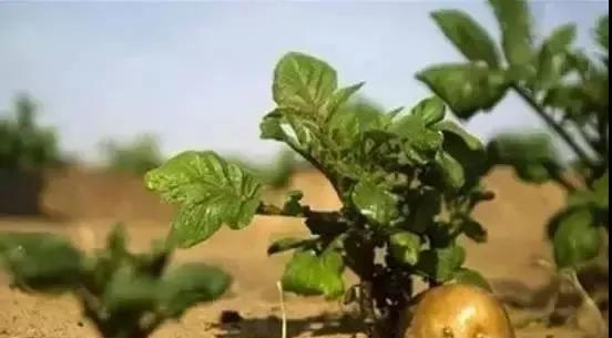 【海外农业】以色列农业
