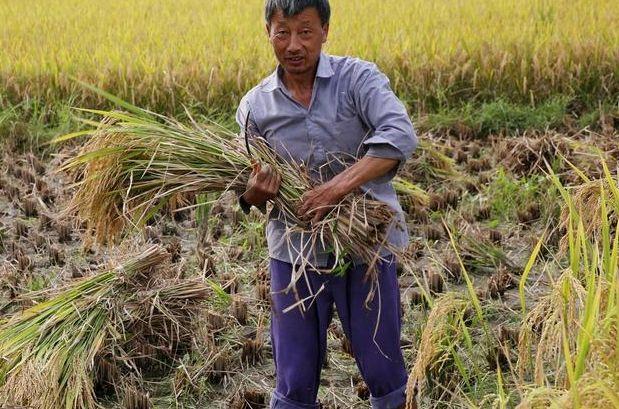 """【深度研究】中国种三年得赔到卖楼并不是""""传说""""!揭示农业衰败真相"""