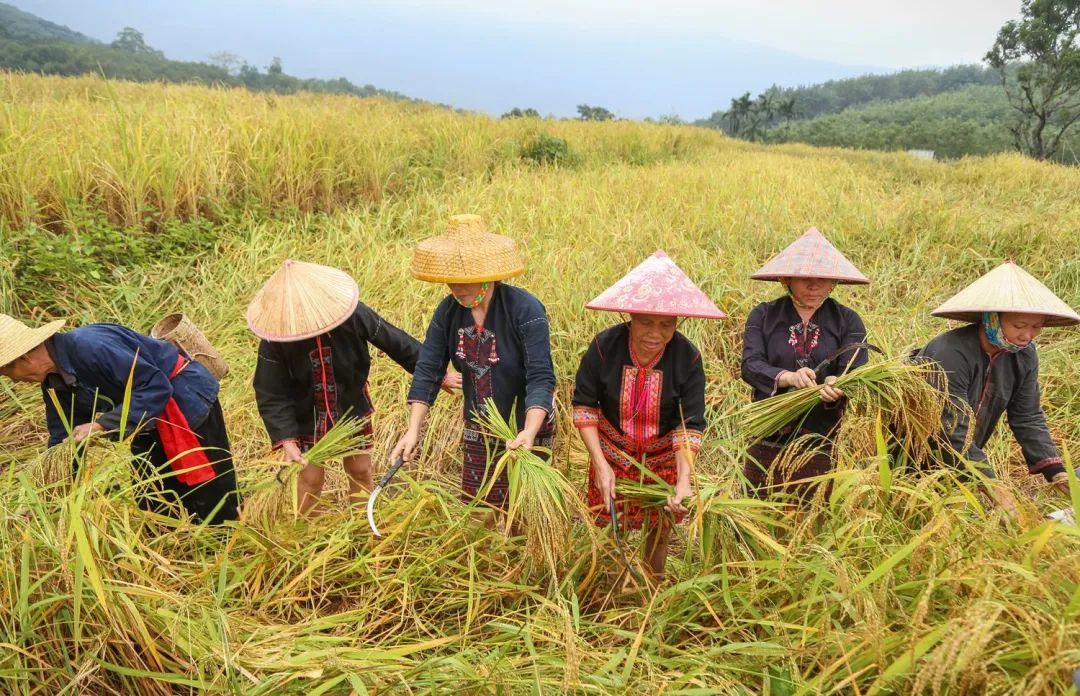 【锐观察】揭开中国农业的真面目,农业为何不赚钱?
