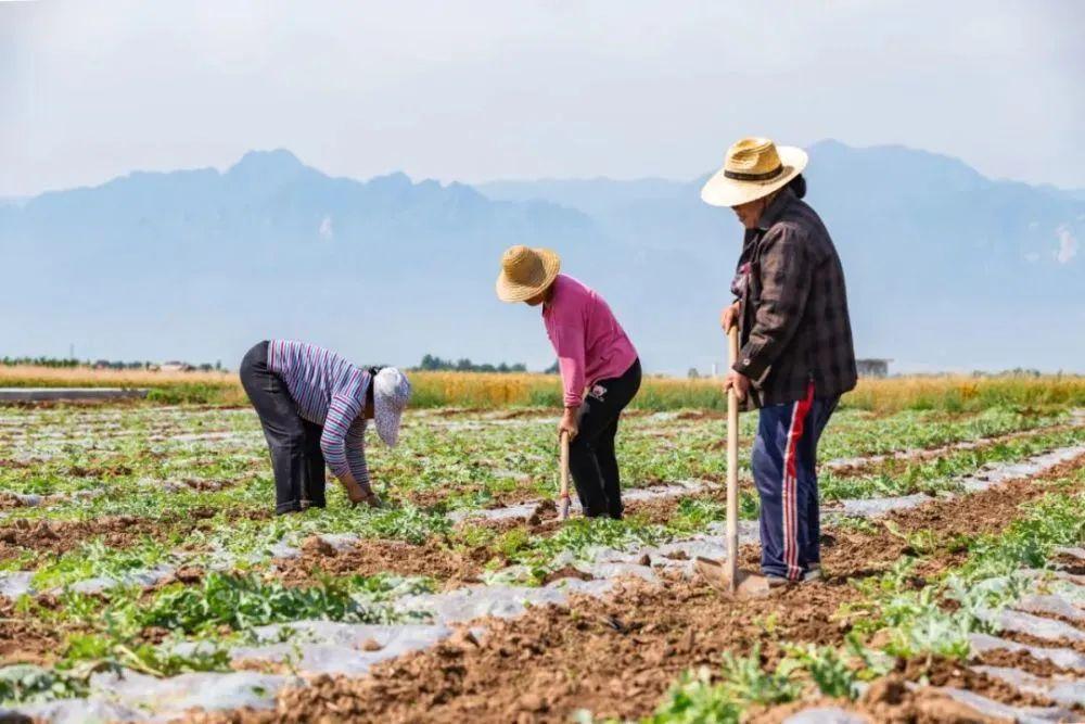 【深度思考】中国农业进入高成本时代?反正农民赚钱越来越难了!