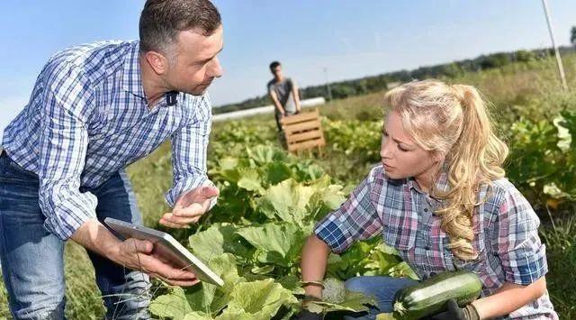 【海外农业】荷兰:耕地面积只有我国的5%,却是全球第2大农产品出口国