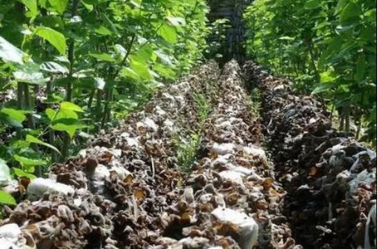 【模式研究】想做循环农业?这几种模式值得参考!