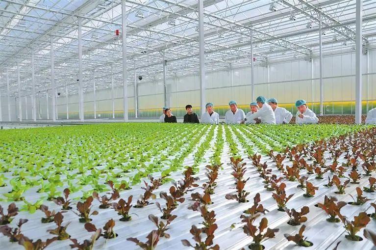 国外是如何建设农业科技园的?