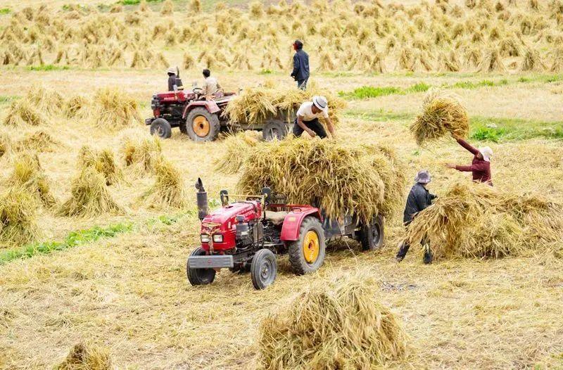 三农日报|政策:绿色种养循环农业试点正式启动;我国农业从业者比重持续下降