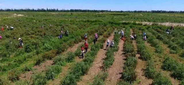 三农日报|政策:支持社会资金投资绿色农业;业内:富硒产业潜力巨大
