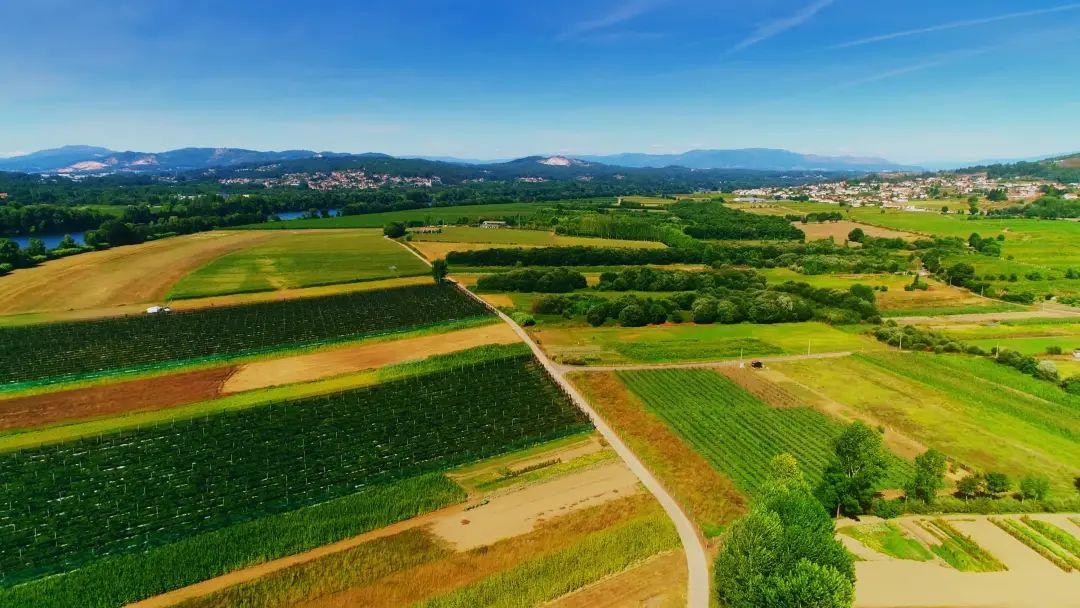 【深度分析】中国农业一个可能的出路