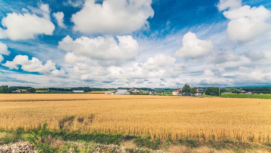【海外农业】日本生态信任农业:你老实种菜,我买一辈子