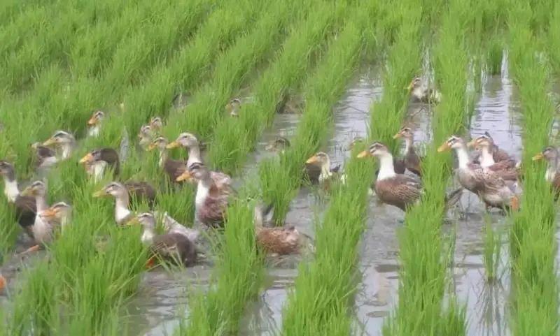 【政策】中央财政支持17个省份试点绿色种养循环农业(附通知)