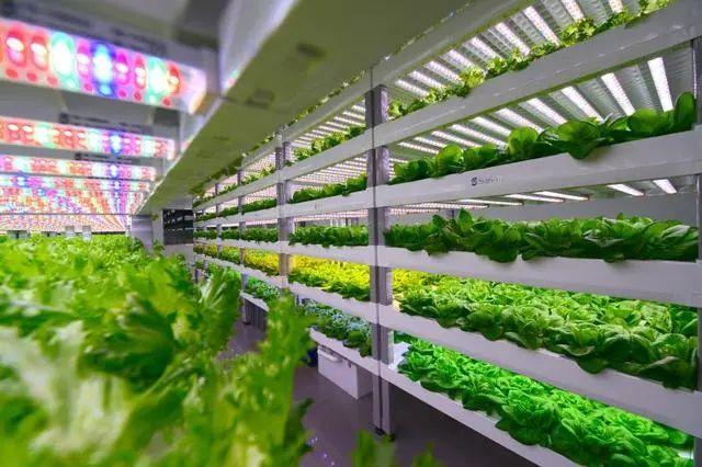 农业新商业:植物工厂+康养农业