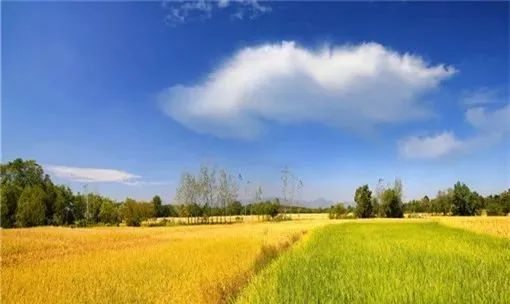 【模式研究】生态循环农业的发展重点