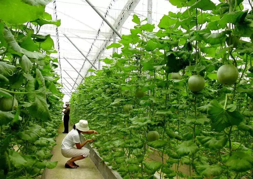 【政策解读】中央财政支持17个省份试点绿色种养循环农业(附通知)