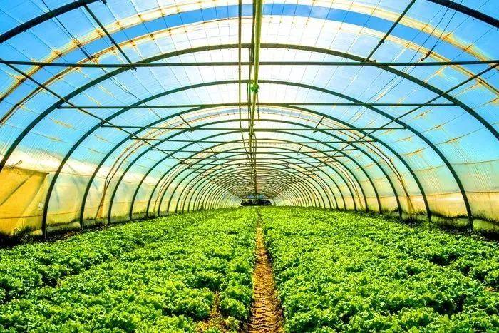 我国设施农业发展现状、存在不足及对策