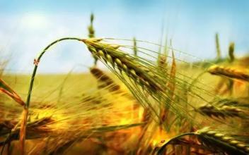 未来哪些种植业方向比较吃香?看看国家政策就明白了!