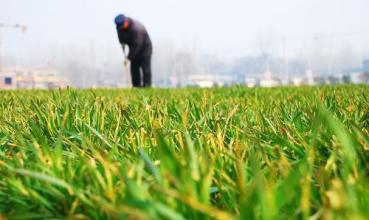农业部:将种业改革先期探索的成果落地扩大