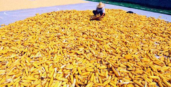 国内外玉米贸易格局变化与对策分析