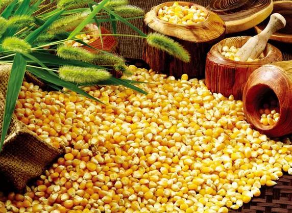 3点原因,预测明年春天玉米价格还会降!