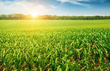 国家不让种玉米了?那种啥?别急~