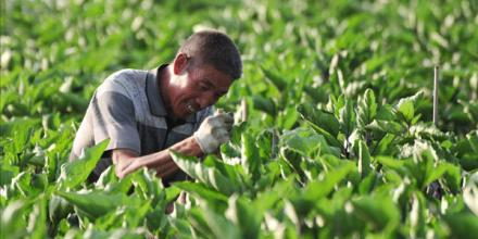 农民朋友注意了!2017年这几种作物不要盲目种植,小心赔钱!